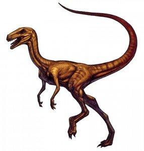 Des petite bêtes ... ! dans Drachenland Compsognathus-286x300